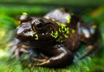 Frog Focus