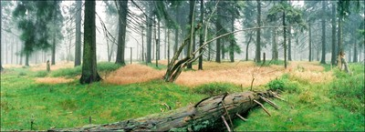 Mountain forest in fog 2