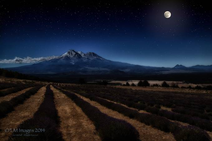 Lavender under the Moon by LMImages - Moonlight Photo Contest
