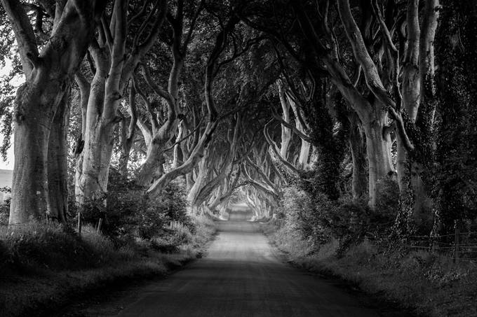 the dark hedges by eddiepierce - Black And White Compositions Photo Contest