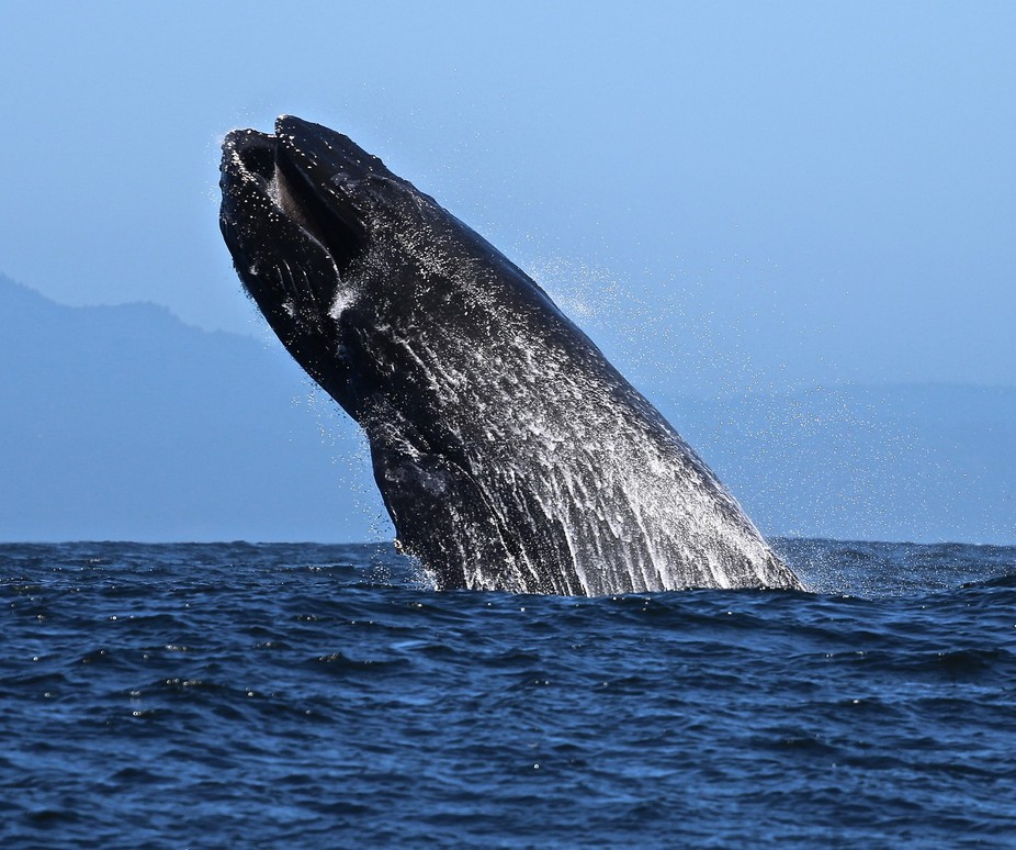 From Whale watching boat tour in Monterey, CA