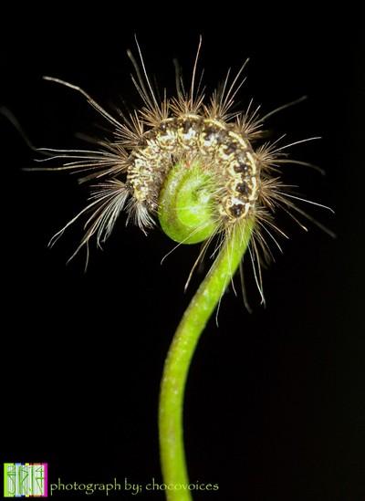 simply caterpillar