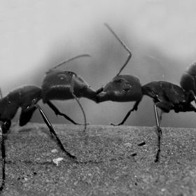 saw these ants doing this!