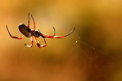 Hanging out on my web