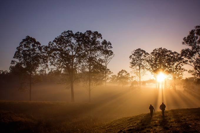 Sunrise by SophieConnolly - Silhouettes Of Trees Photo Contest