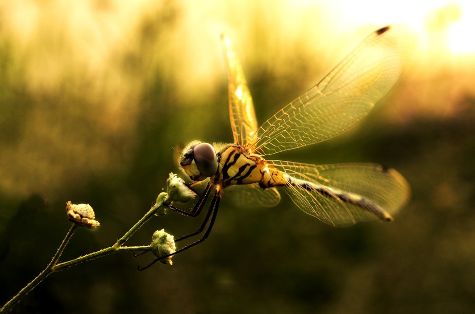 looks like The Dragon Fly is in a mood of driving...  doesn\'t he look so?  or he is just smelling...