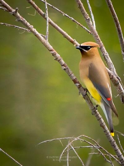 Pretty Bird-2