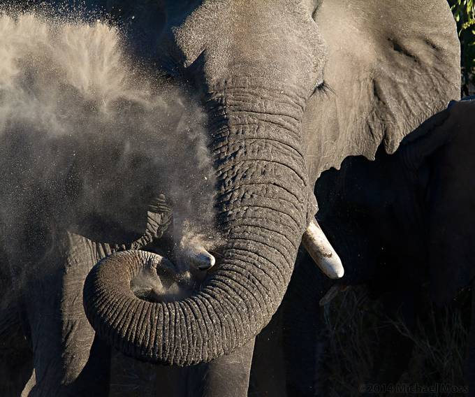 Elephant Dust Bath by mytmoss - Pushing Limits Photo Contest