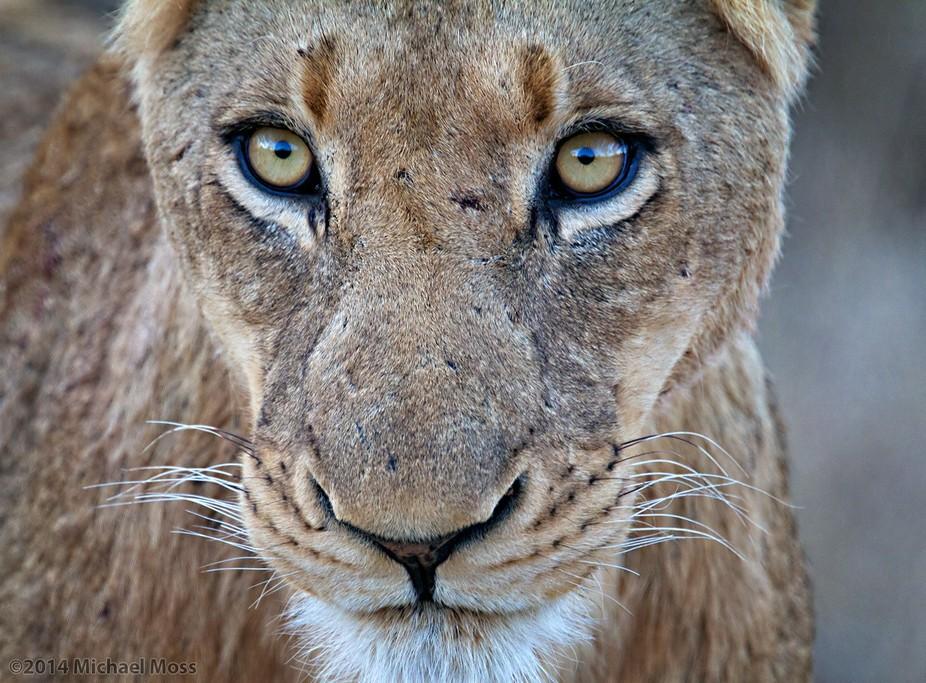 Lion Sands Reserve, Sabi Sands, South Africa