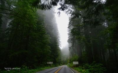 Into the Fog....