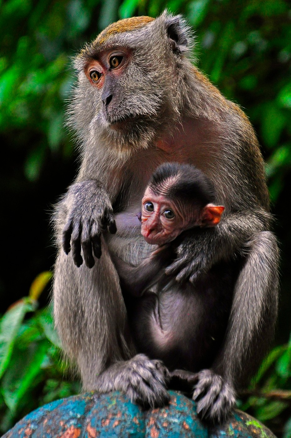 Comfort by MEDOM - Monkeys And Apes Photo Contest