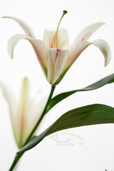 Backlit-flowers_0055-copy