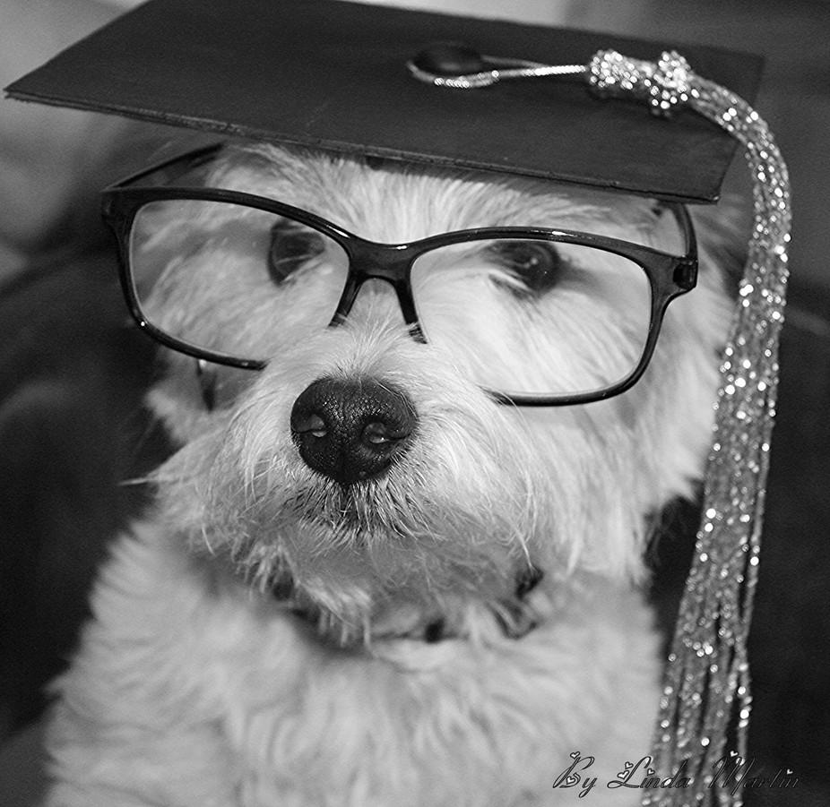 Professor Westie honoring all 2014 Graduates  He himself is top dog of his class