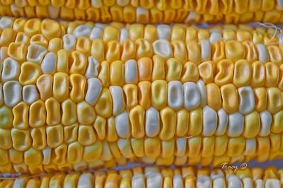 Corn on the cob - old
