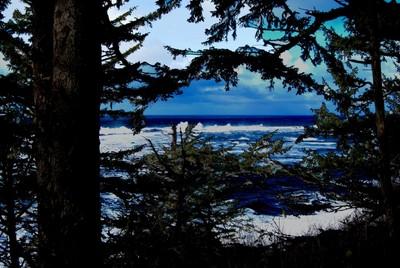 Ocean-View-Through-SomeTrees-orig-#-025-WEB