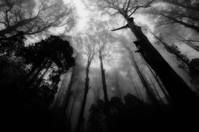 P1090376   Dandinong Ranges / Victoria  3 by kevinfairley - Skywards Photo Contest