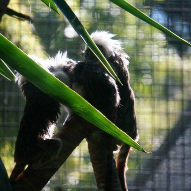 3 little monkies