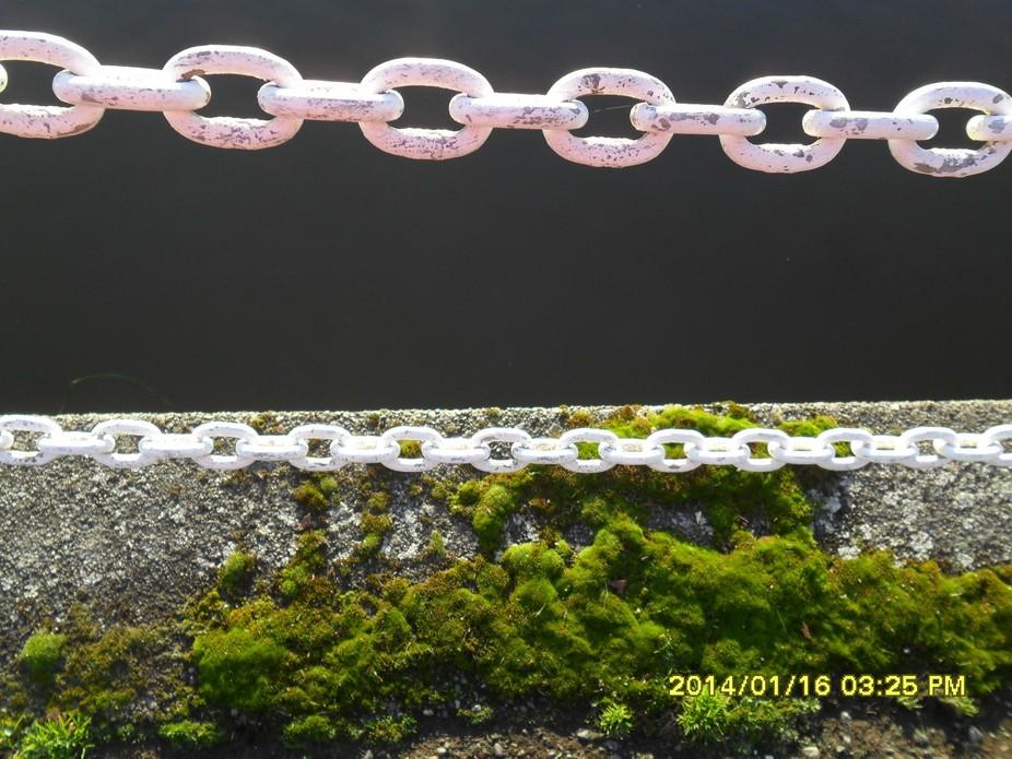 Chains (5251)