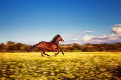 Wild horses couldn
