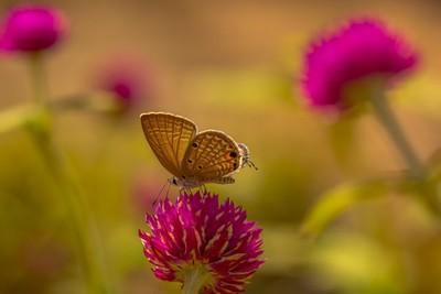 Butteryfly on a Flower