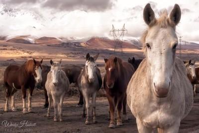 Three Hundred Ninety-Five Horses