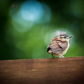 Baby bird on the fence
