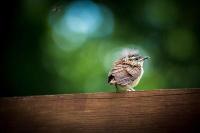 Baby bird on the fence