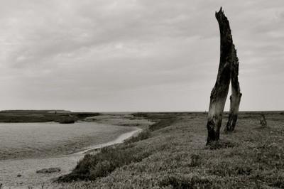 bleak coast