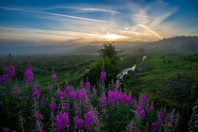 Purple Fog by naoisekelly - Meadows Photo Contest