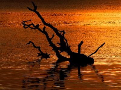 Tree stump in the sea