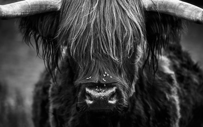 Highlander by roryturnbull - Pushing Limits Photo Contest