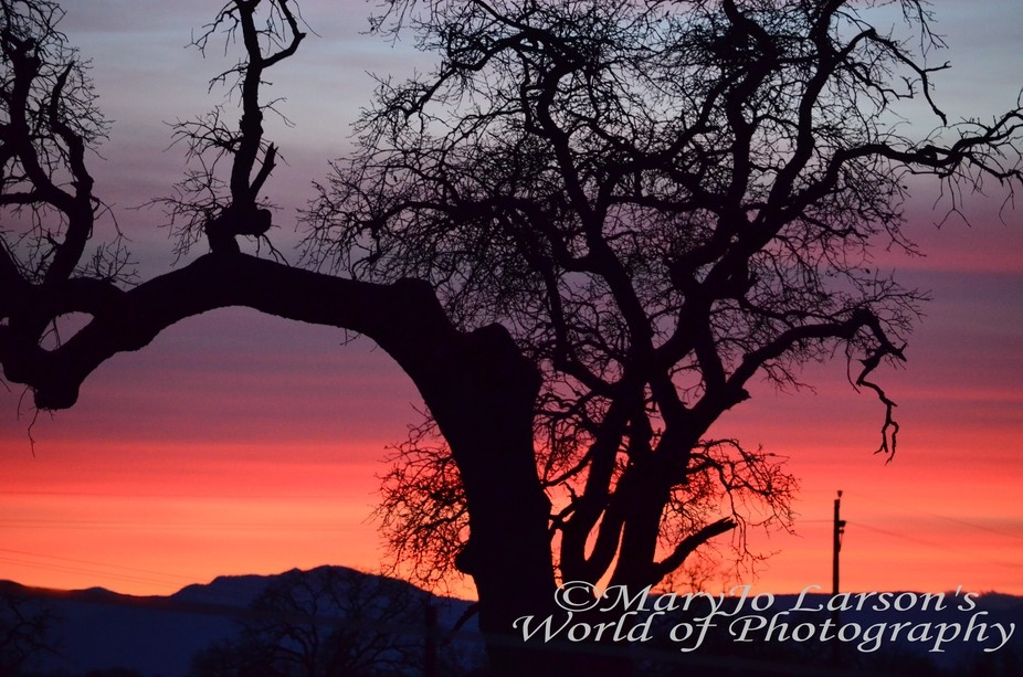 Sunset Beyond the Oak Tree
