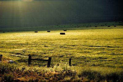 Hay Field, idaho