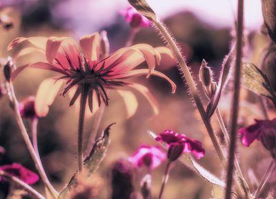 Floral--2