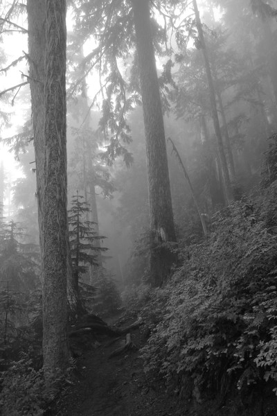 Black and white of forest