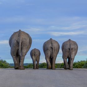 Heading down the road at the end the day - at Addo Elephant National Park, South Africa