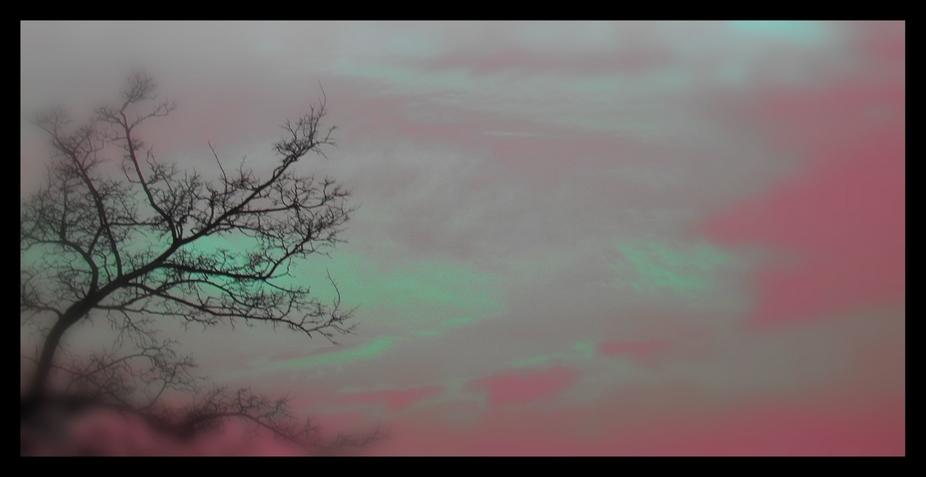 Tree sky colors