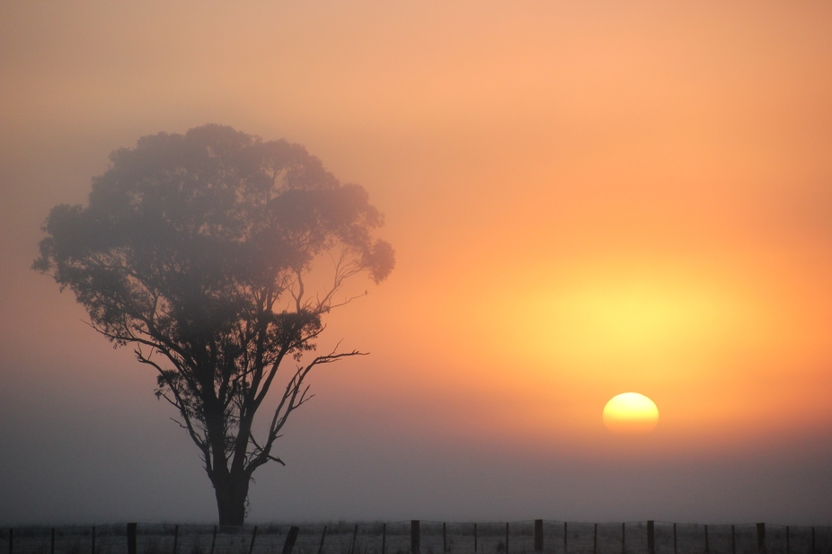 Fogy sunrise over Shepparton 23rd July 2014