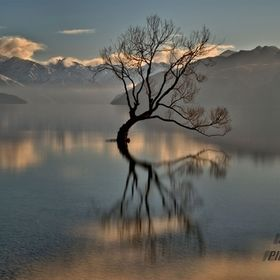The 'Lone Tree' Lake Wanaka, New Zealand