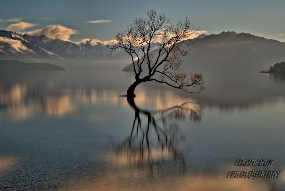 The \'Lone Tree\' Lake Wanaka, New Zealand