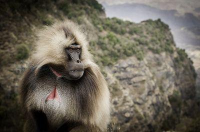 Mountain Contemplation (Ethiopia)