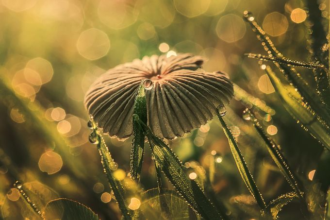 Morning Dew! by sharischultzmccollough - Mushrooms Photo Contest