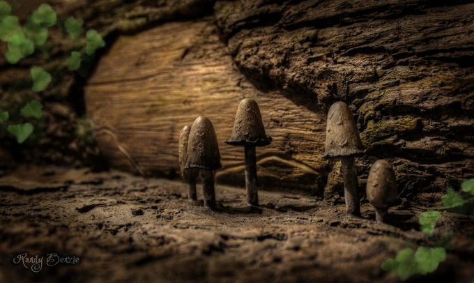 Through A Gnomes Eyes by randybenzie - Mushrooms Photo Contest