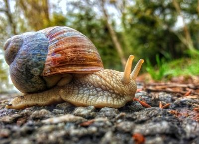 Snail on the way
