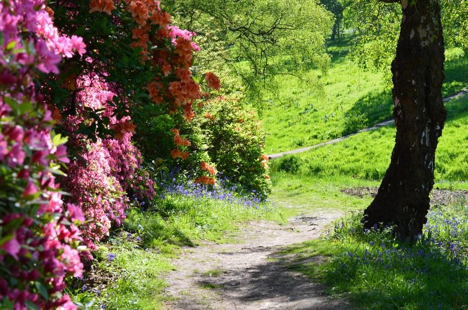 Valley Gardens, Virgina Waters