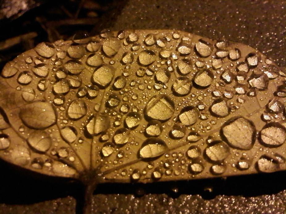 moisture leaf