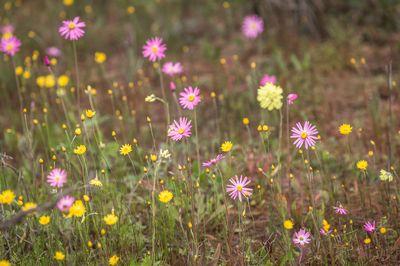 blooming wild-flowers