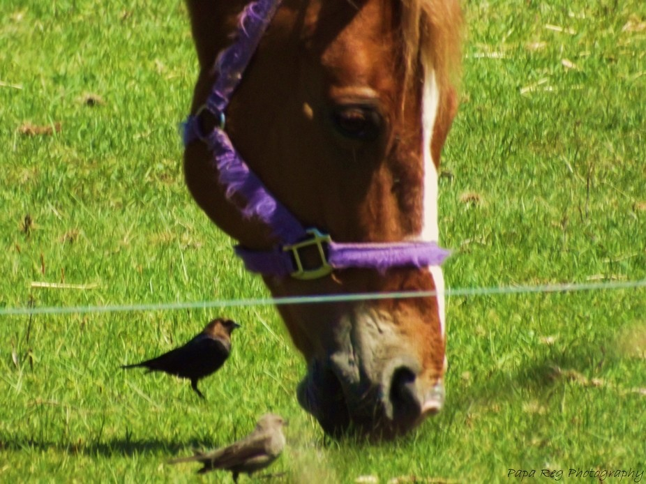 A horse and birds feeding together