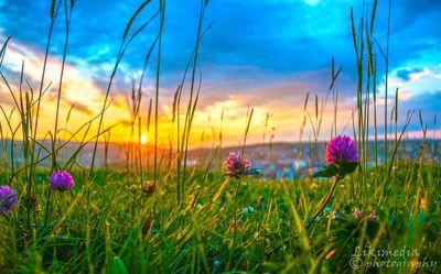 Sunset behind flower.