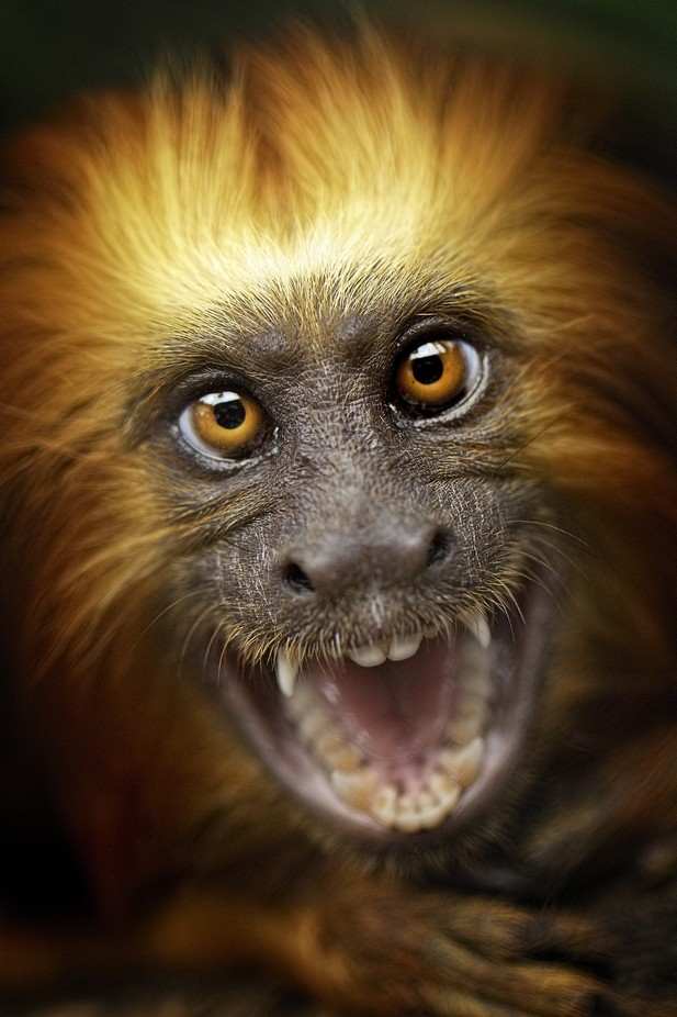 IMG_9952 by sanzerock - Monkeys And Apes Photo Contest